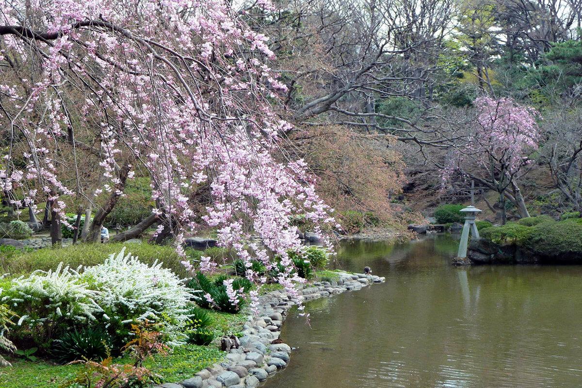 有栖川宮記念公園・桜