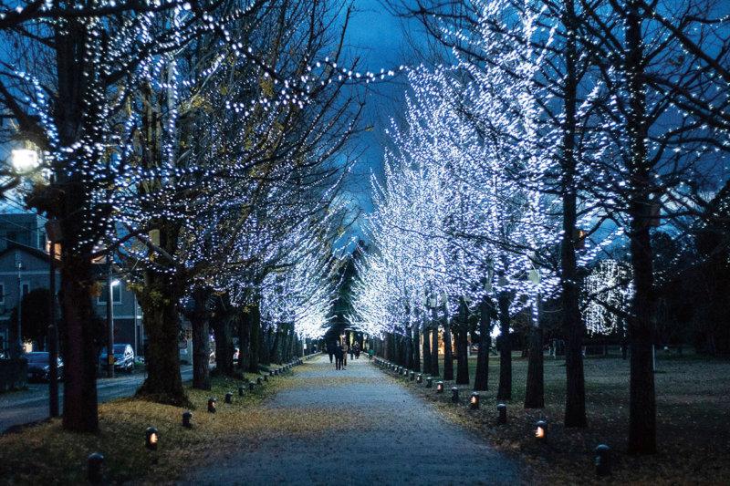イチョウ並木の黄葉やイルミネーションにうっとり。岐阜県各務原市「学びの森」へ行ってみよう。