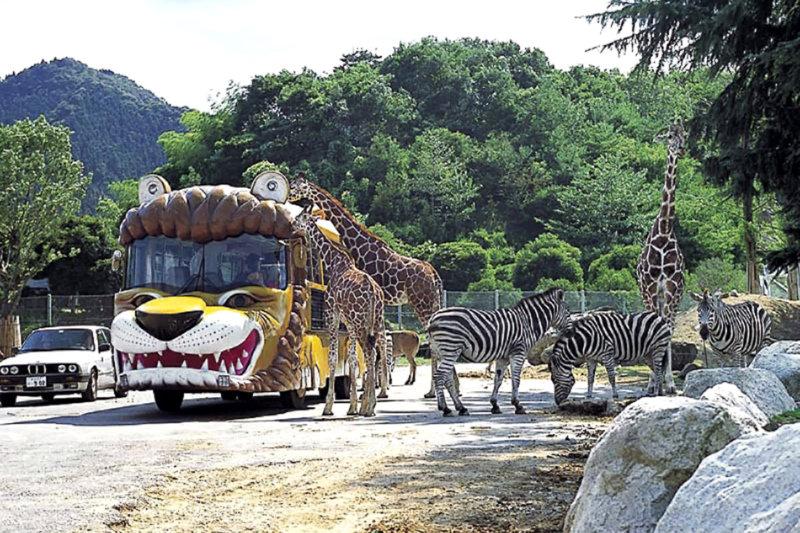 群馬県富岡にある動物園「群馬サファリパーク」へ、日本唯一のスマトラゾウなどの珍しい動物に会いに行こう!