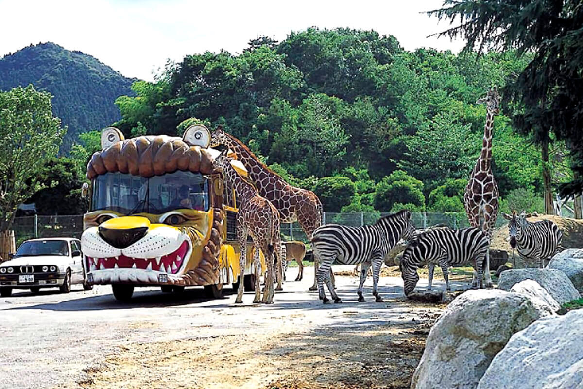 群馬サファリパーク エサやり体験バス