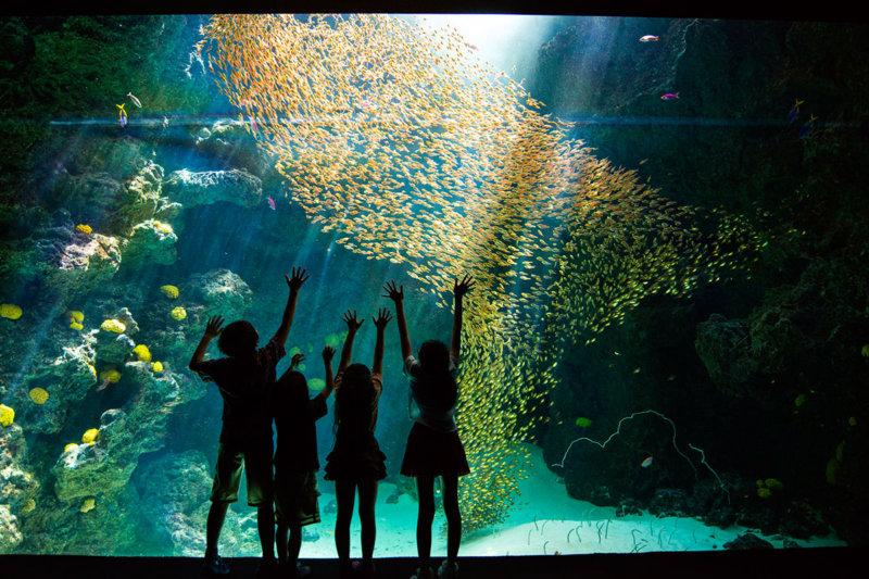 「アクアマリンふくしま」で泳ぐ魚たちを眺めながらお寿司を食べる!? 海の魅力を五感で学ぼう