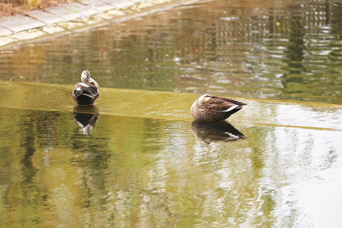 万博記念公園 水場