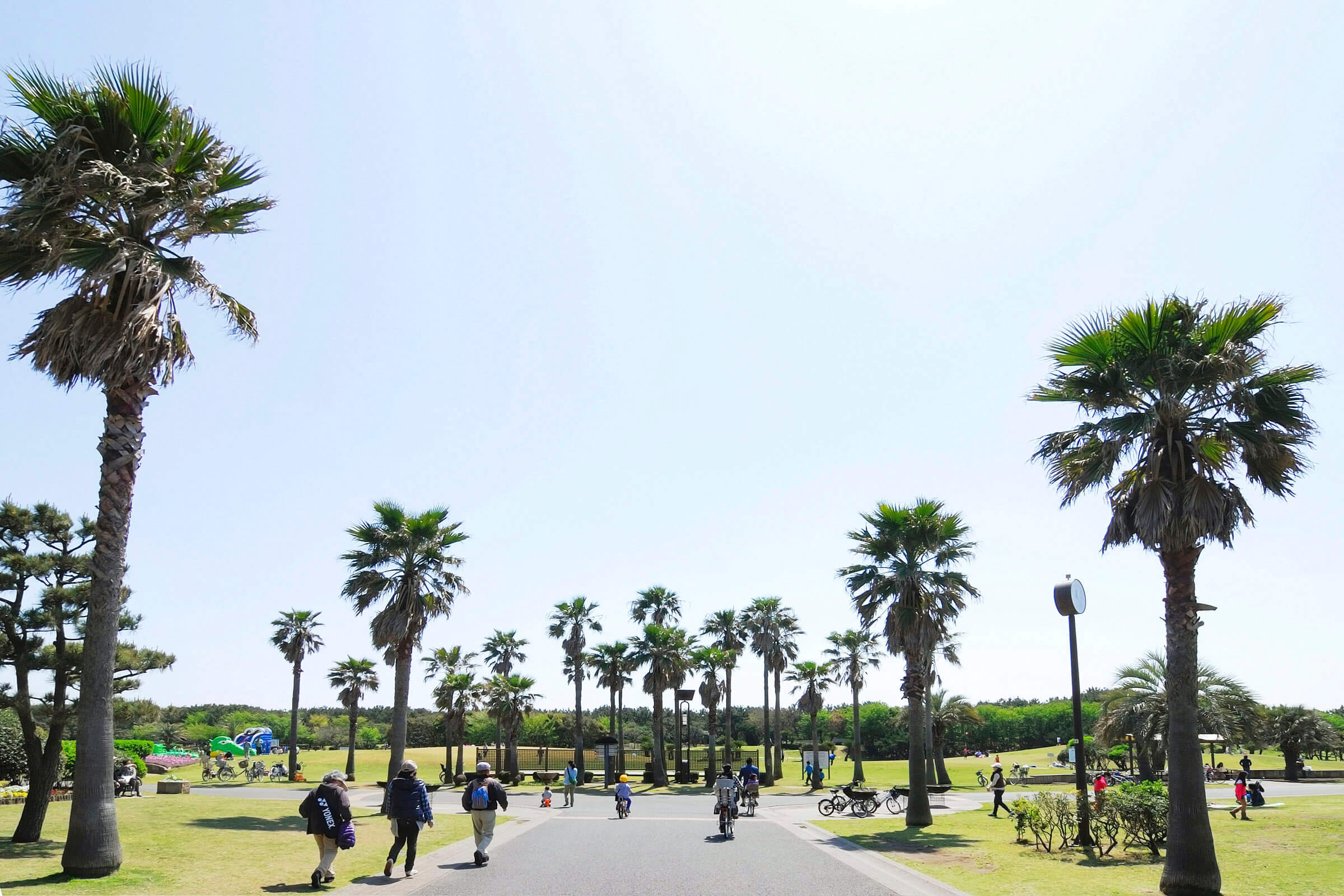 辻堂海浜公園 ヤシの木