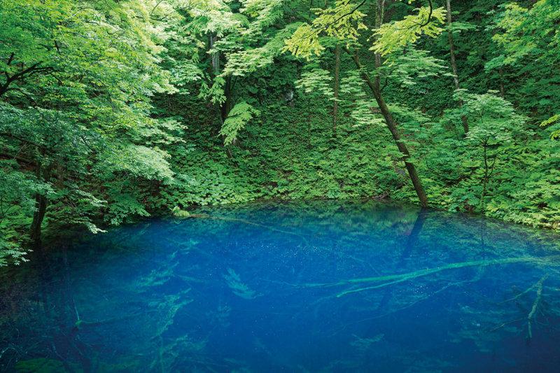 神秘的な青い池。青森県と秋田県をまたぐ世界自然遺産 白神山地にある「青池」をご紹介