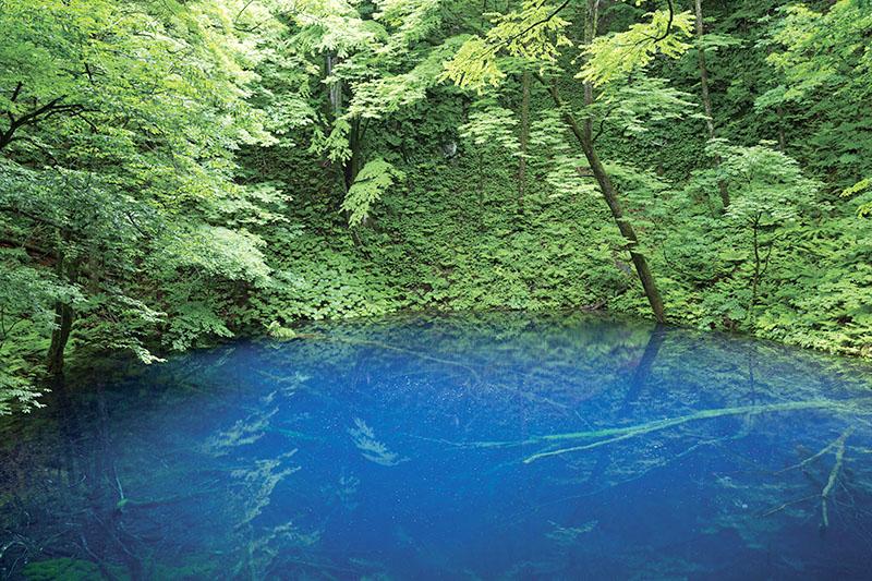 神秘の青い池。青森と秋田をまたぐ世界自然遺産・白神山地「青池」