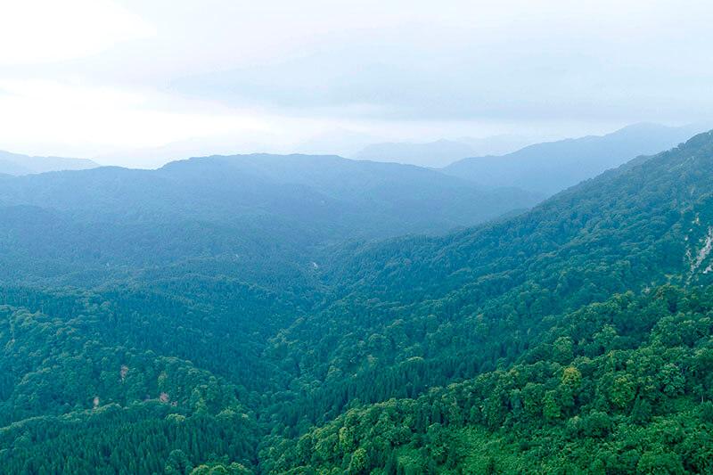 広大なブナ林の原生林が神秘的な白神山地