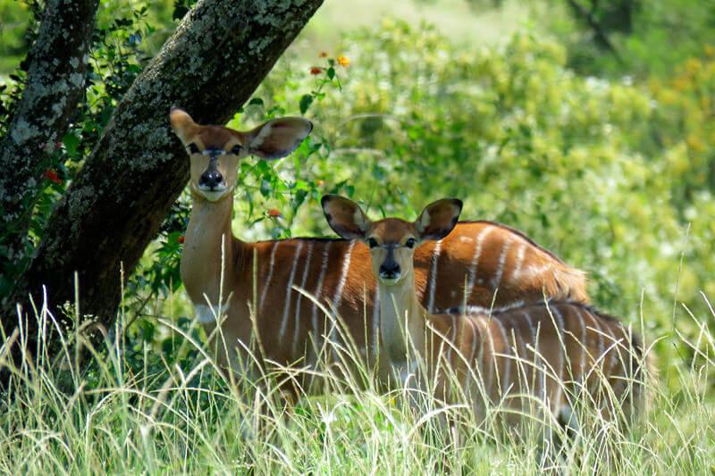 ムリルワネ自然保護区