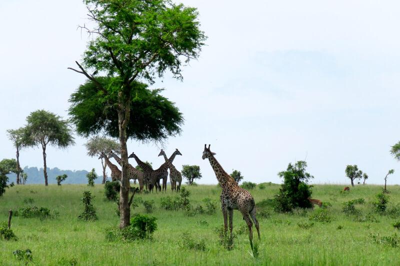 タンザニアのミクミ国立公園