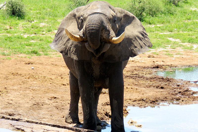 象大国ボツワナ