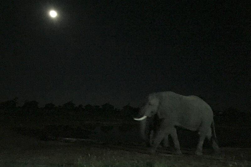 夜のエレファントサンズロッジ