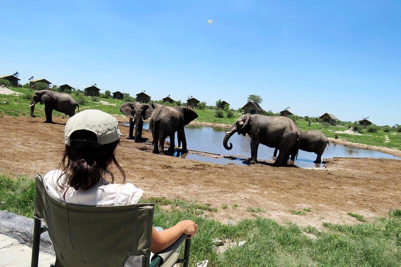 南アフリカ後半と、ボツワナの動物三昧の日々、そして南アフリカの名産をご紹介します!