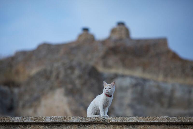 カッパドキア 猫