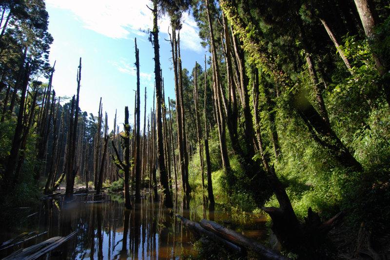 日本ではまだあまり知られていない台湾の秘境!!「忘憂森林」の景色を見に行こう。